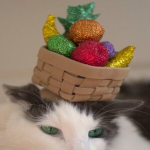 cat with basket of fake fruit on head