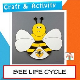 drawing of bee life cycle craft
