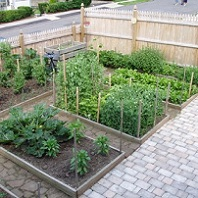 backyard patio with several raised vegetable beds