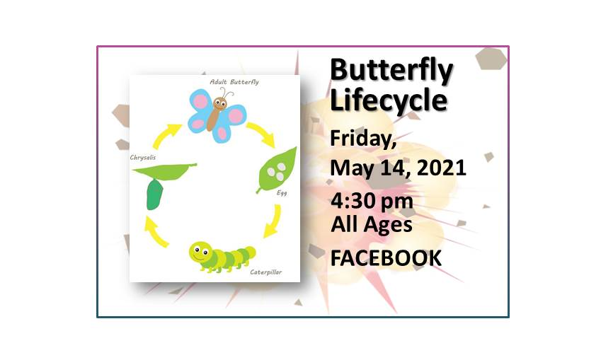 210514 Boredom Buster Butterfly Lifecycle on Facebook Live