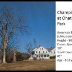 Picture of Champion Tree at Onatru Farm Park